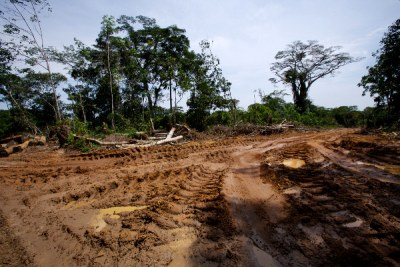 Logging destruction in Congo-Kinshasa.
