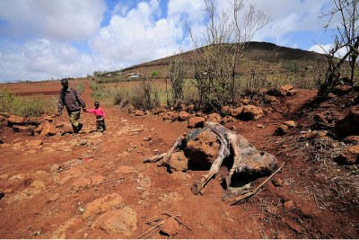 Drought in Kenya (file photo): More than 60,000 people in the area are under the Food for Assets programme and depend on relief food distribution, according to a government official.