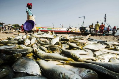 Woman walks past fish laid out (file photo): Illegal fishing rampant in Tanzania waters.