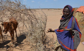 Despite Rains, Ethiopia Teeters on the Brink of Famine