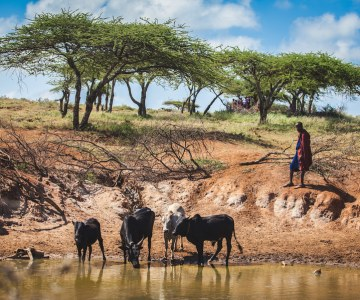 Emerging Diseases Threaten Maasai and Their Herds
