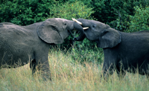 Zimbabwe Puts Wild Animals Up for Sale