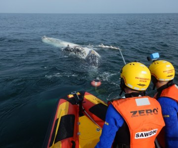 South African Sea Rescue Institute Saves Humpback Whale