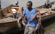 Fish Stocks Recovering in East Africa's Fragile Lake Victoria