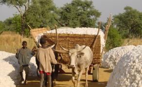 Filière Coton - L'heure des grands défis