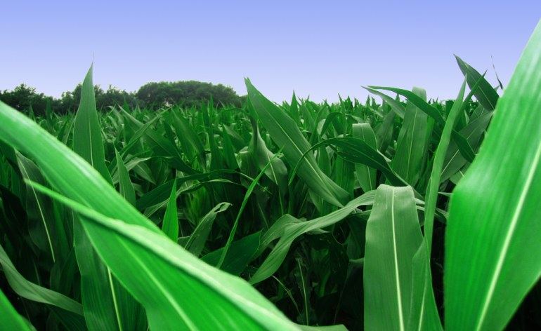 Zambia: Copperbelt Maize Bran Prices Go Up - allAfrica com