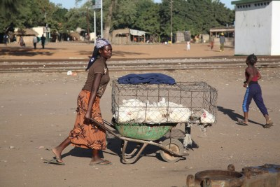 A poultry seller transports chickens to market in Mozambique (file photo).
