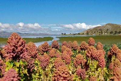 20 février 2013, lancement de l'année internationale du quinoa