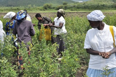 Combating Climate Change in Kenya