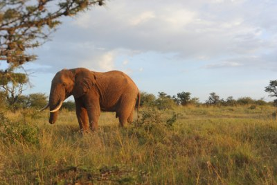 Tanzania seeks help from international community over poaching.