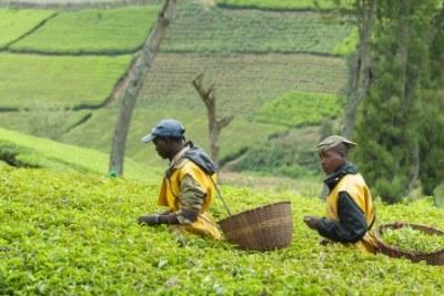 Exploitants agricoles en Afrique