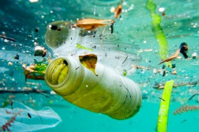 Ocean litter has a huge impact on wildlife.