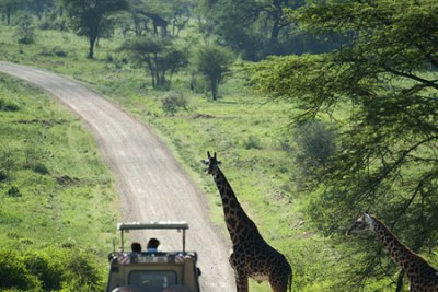 Serengeti Park Road.