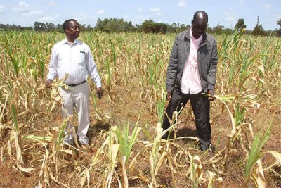 Cyril Cheruiyot (left), Agriculture Chief Executive for Uasin Gishu County, at a farm belonging to Leonard Kimutai (right), a resident in the county on June 26, 2017.
