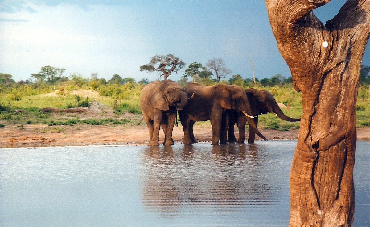 Africa: Kenya to Host First Africa Protected Areas Congress