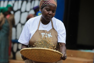 Agnes Nyinawumuntu, a former housemaid is today a model coffee farmer in Rukara, Kayonza District.