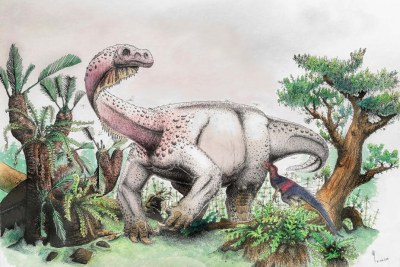 The dinosaur Ledumahadi mafube - reconstructed in this illustration - made headlines in 2018.