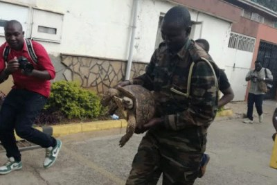 KWS officials were called in to rescue the tortoise from the apartment in Kilimani, Nairobi during the Tuesday raid.