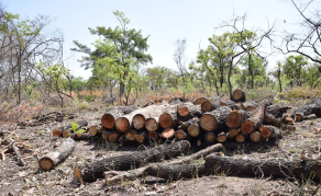 Ugandans Fired Up to Fight Deforestation
