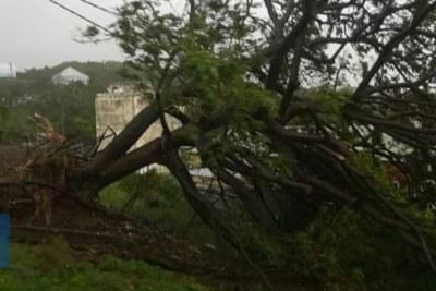 La chute des arbres a été fatale pour le réseau électrique de l'île.