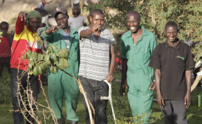 Kenyan Youth Swop Guns for Spades to Create Green Spaces