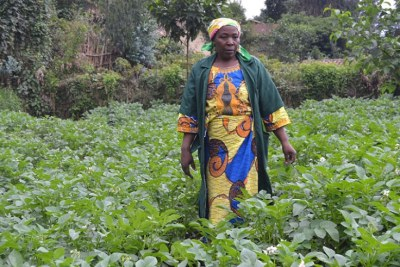 A Nyabihu-based professional Irish potatoes farmer stands in her plantation. Farmers said getting access to financial services will boost their welfare.