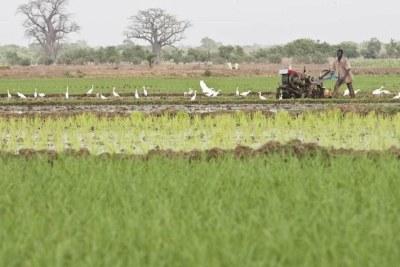 L'agriculture est indispensable au développement de l'Afrique mais il est également fondamental d'en développer la mécanisation afin d'augmenter la productivité agricole et de répondre à la hausse de la demande alimentaire.