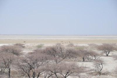 The Makgadikgadi Basin in Botswana in 2011.