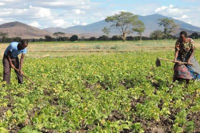Small-scale farmers in Tanzania are receiving support to improve food security in the face of the Covid-19 pandemic.