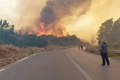Les services de la Protection civile ont enregistré depuis hier, lundi, le déclanchement de 36 incendies au niveau de 18 wilayas, le Centre du pays étant le plus touché par le feux.